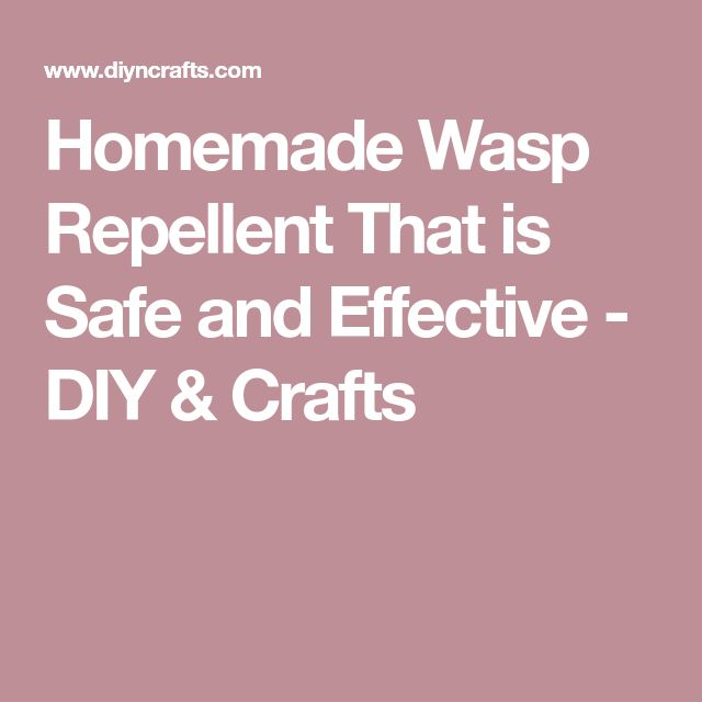 Homemade Wasp Repellent That is Safe and Effective - DIY & Crafts
