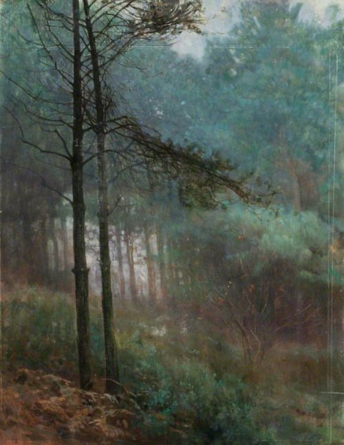 blastedheath: Benjamin Haughton (British, 1865-1924), Study of Fir Woods. Oil on board, 40 x 31.3 cm. Portsmouth Museums and Records Service.