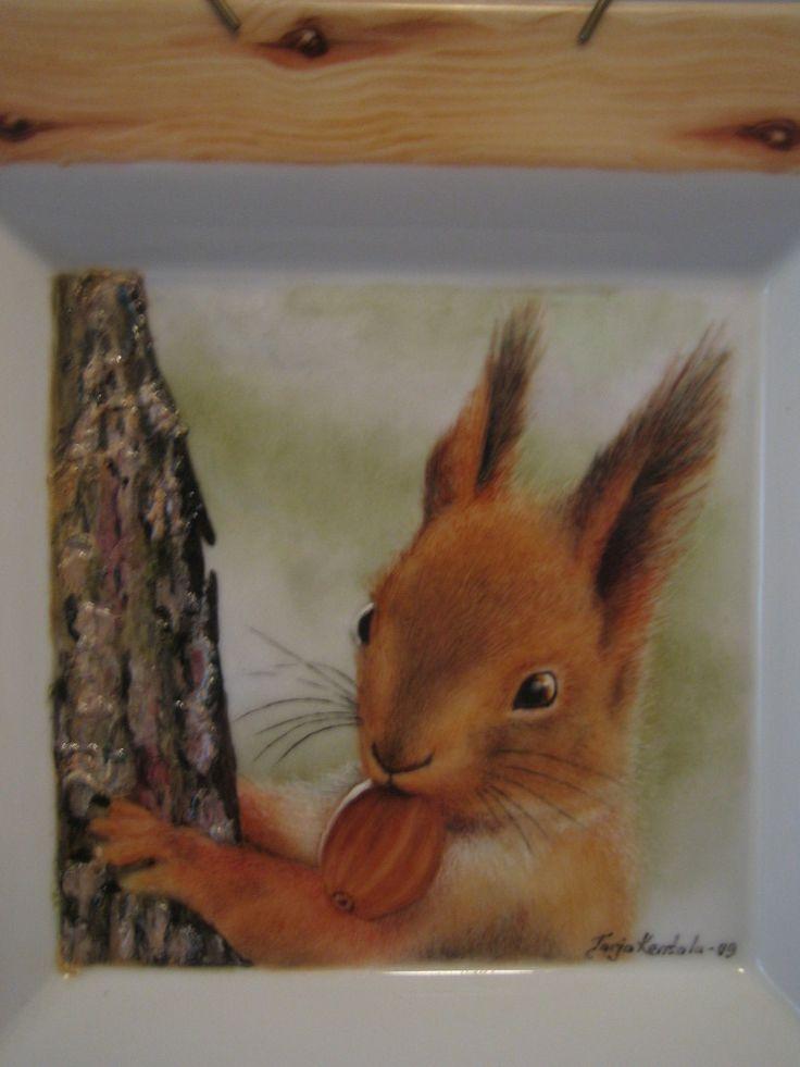 orava puussa posliinilautaselle maalattuna