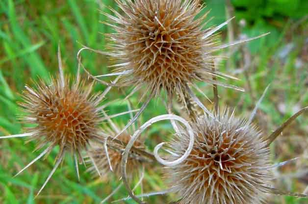 Gardening Basics: Identifying Weeds in Your Garden Not sure how to tell the good from the bad when identifying weeds in your garden? We'll h...