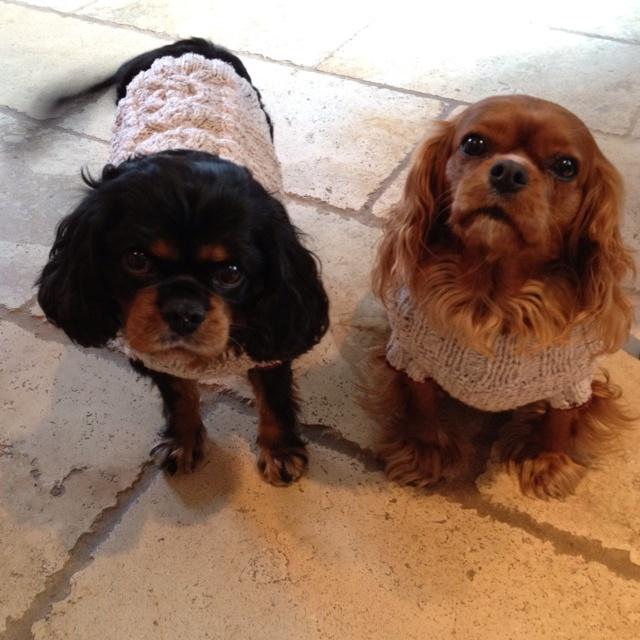 Winston & LeeLu. Cavalier King Charles Spaniels