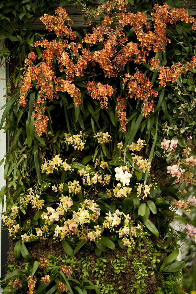 The Orchid Show: Patrick Blanc's Vertical Gardens | NYBG