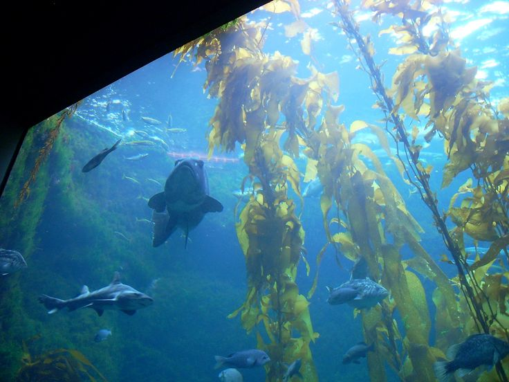 Have you ever been the Birch Aquarium in La Jolla, CA? Join me for a mini-tour!