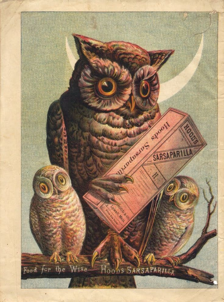 160 best Vintage Owl Lady images