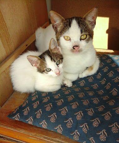 KEDİ SEVENLER ♥ CAT LOVERS - Topluluk - Google+