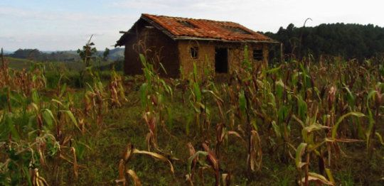 Agricultural policies aimed at alleviating poverty in Africa could be making things worse, according to new research. The study finds that the so-called 'green revolution' policies in Rwanda -- claimed by the government, international donors and organizations such as the International Monetary Fund to be successful for the economy and in alleviating poverty -- may be having very negative impacts on the poorest.