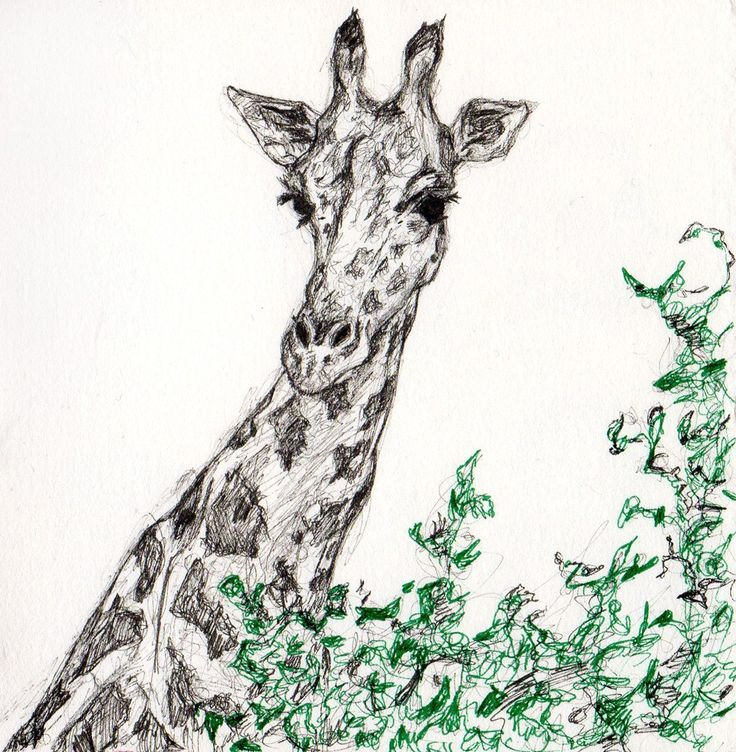 My Eyes Are Up Here - Original Ink Drawing - Giraffe Illustration. $150.00, via Etsy.