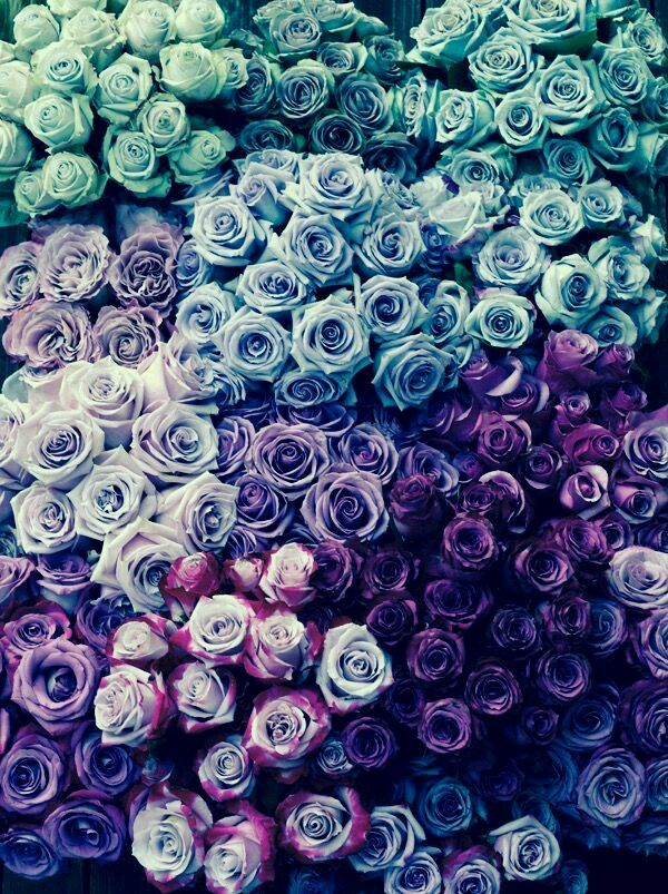 Princess Roses In 2019 Flower Wallpaper Blue Rose Tattoos