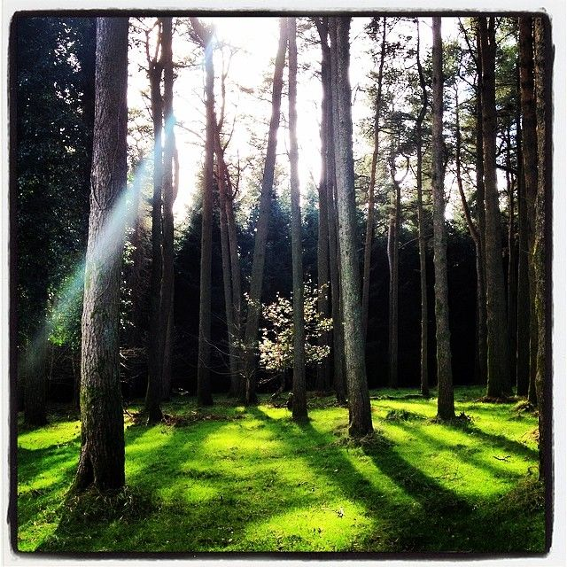 Peace in the Trees, Wicklow! I love Ireland!