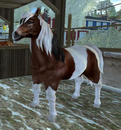 Hästar [Starstable Database] | Sso horses I own ...