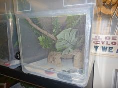 DIY: Crested Gecko Tubs