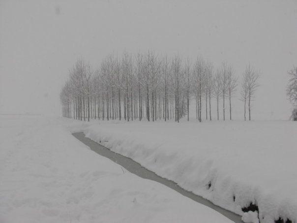 Nevicata gennaio 2009