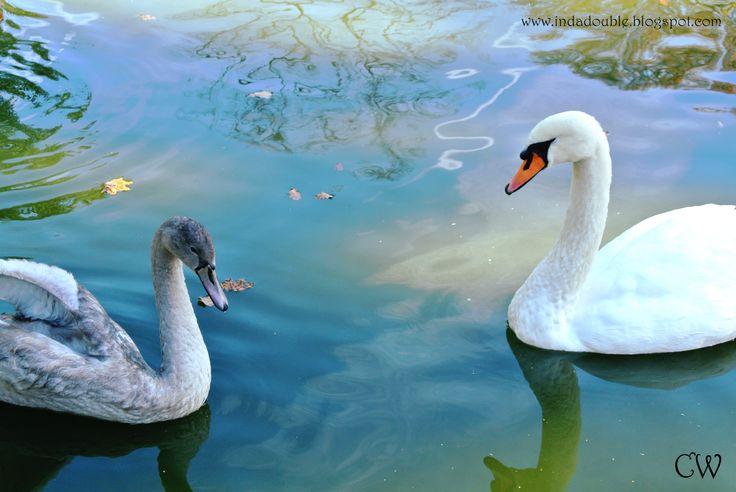 Nature Photography #1 - Animals | Carinda's World