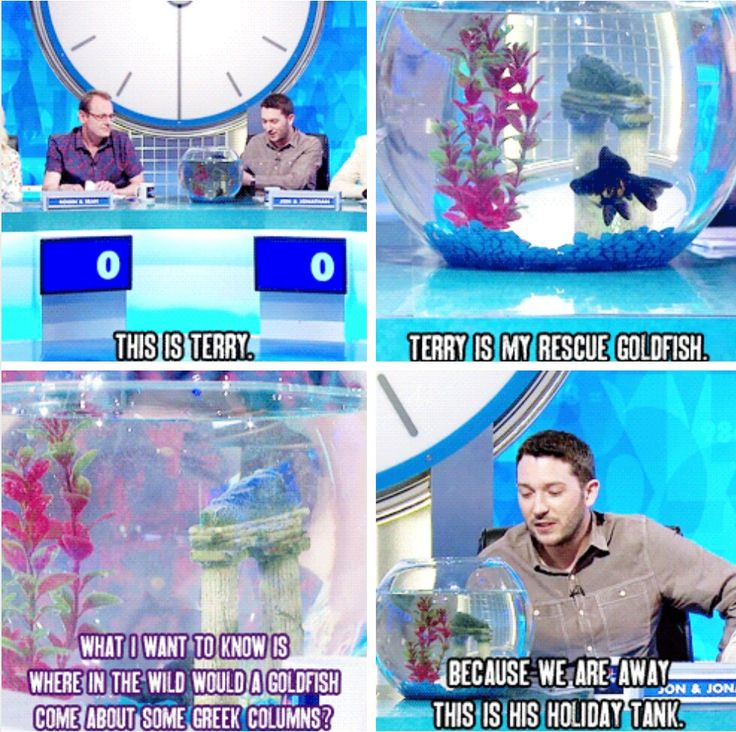Jon Richardson and his fish Terry on 8 out of 10 Cats does countdown