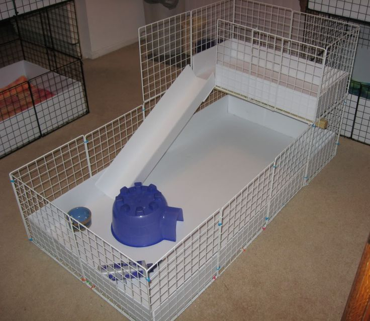 Best 25 c c cage ideas on pinterest cages for guinea for Guinea pig cage for 3