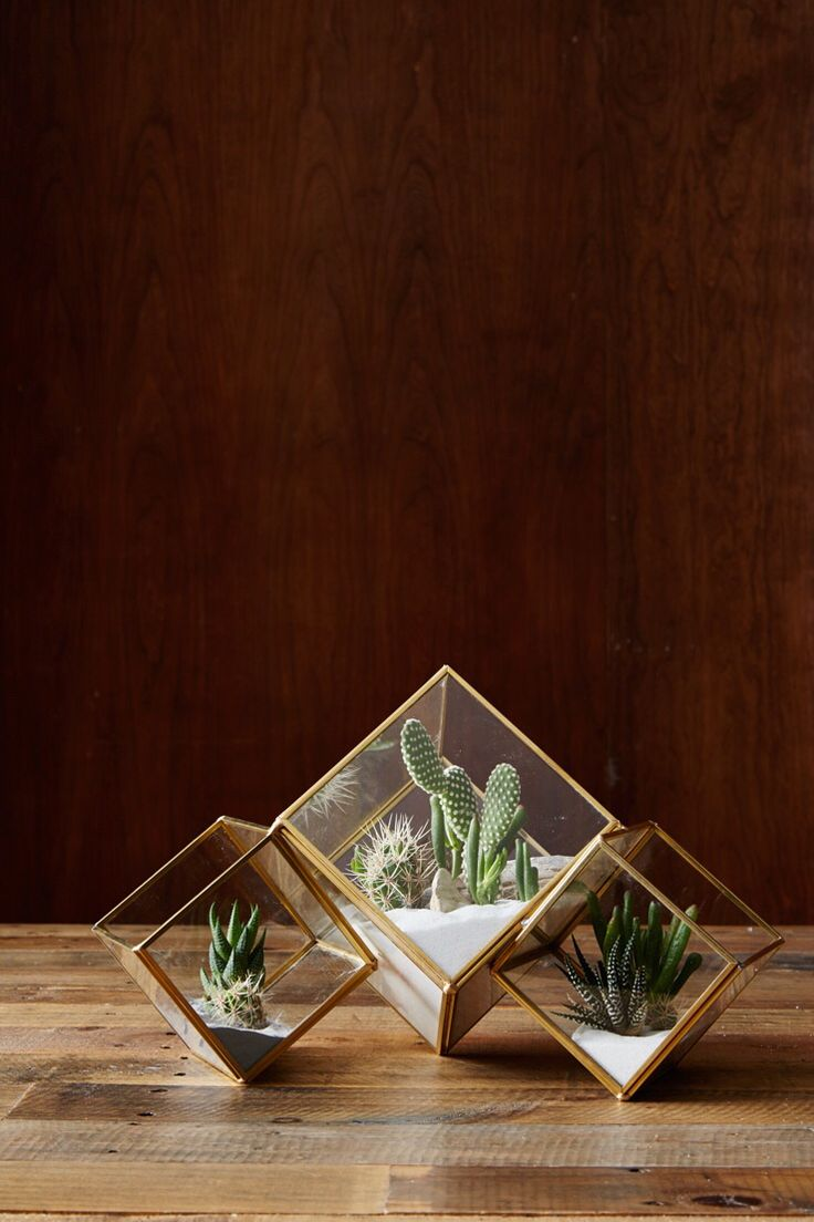 Geometric terrariums. I'd like to have these on my desk at work.