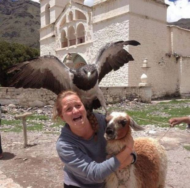 18 Funniest Photobombers Of All Time