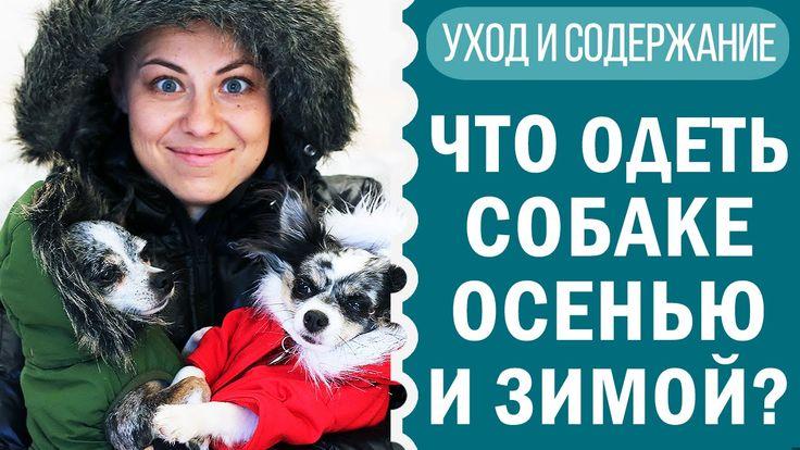 Осень уже пришла, а зима уже приближается, а мы уже запаслись одеждой и обувью для собак! Пишите, что из одежды вам больше всего понравилось! И напишите свое мнение, как вы считаете, нужна ли собаке одежда или же это прихоти владельцев и дань моде?  https://www.youtube.com/watch?v=wRJs5GPYwXg https://www.youtube.com/watch?v=wRJs5GPYwXg https://www.youtube.com/watch?v=wRJs5GPYwXg  #собаки #собака #догмама #чихуахуа #чихуа #чихуахуасофи #чихуаэйван #одежда #длясобак #обувь #musthave #ютуб…