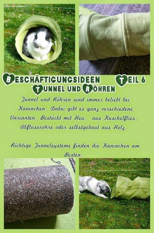 6 Tunnel-Röhren-Kaninchen