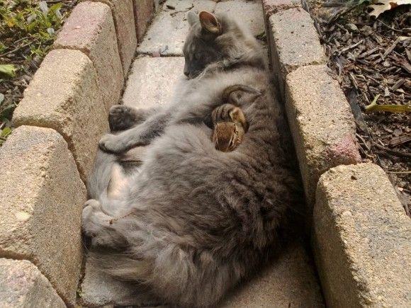 庭にシマリスがやってきた。飼い猫が興味深々で近づいていったところ思わぬ展開が待ち受けていた!