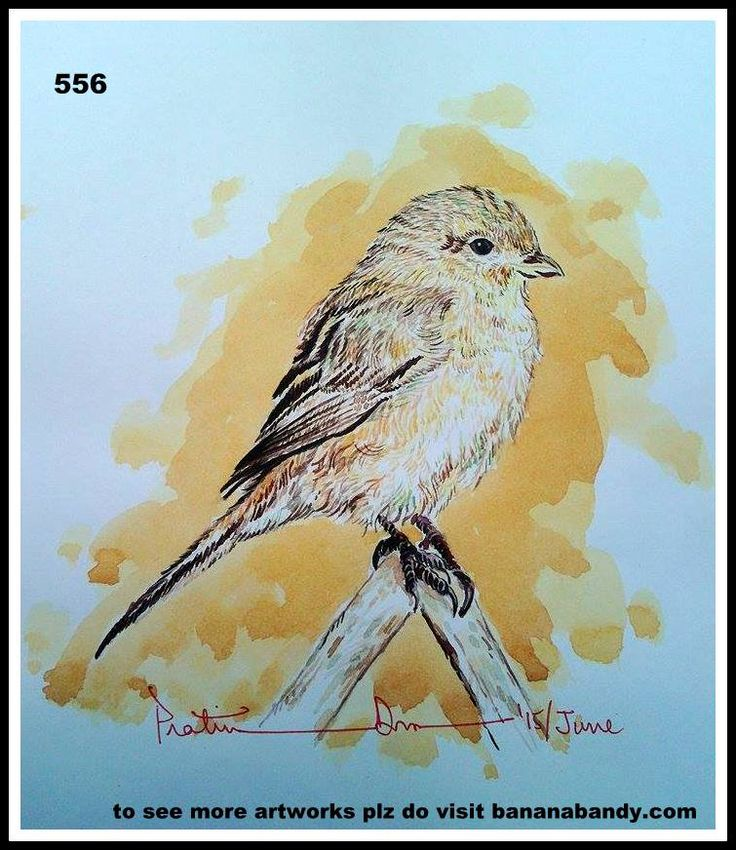 PAKHI DEKHUN PAKHI CHINUN # 531/556(Observe the Bird and recognize)...ISABELLINE/DAURIAN SHRIKE... WATERCOLOUR...A4...2015... [FROM PHOTOGRAPH OF MR. SONU ARORA] ... The isabelline shrike or Daurian shrike (Lanius isabellinus) is a member of the shrike family (Laniidae). It was previously considered conspecific with the red-backed shrike and red-tailed shrike. This migratory medium-sized passerine eats large insects, small birds, rodents and lizards. Like other shrikes it hunts from…