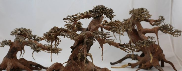 Aquarium Driftwood for Sale - Manzanita Driftwood Pieces - BONSAI DRIFTWOOD