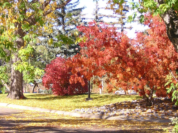 Path to University of Alberta Faculty Club in the autumn