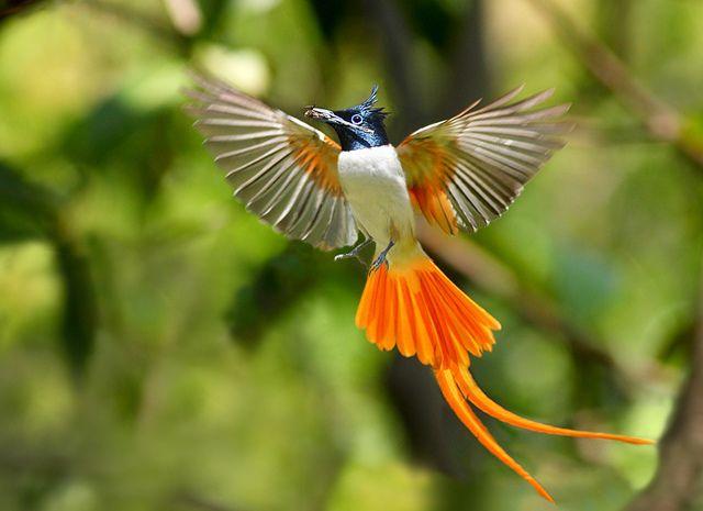 Rainforest Birds Flying Pictures of Birds of P...