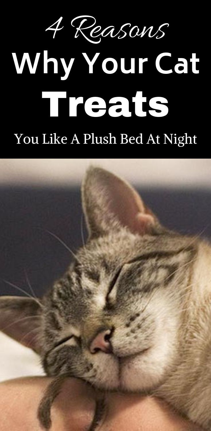 4 Reasons Why Your Cat Treats You Like A Plush Bed At Night Cats Are Renowned For Their Tendency To Sleep In Strange Places Do Cat Sleeping Cats Cat Curling