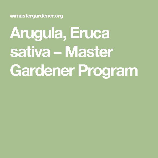 Arugula, Eruca sativa – Master Gardener Program