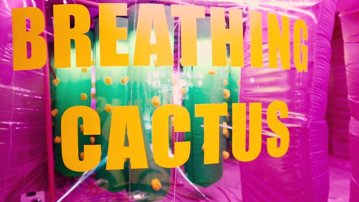 GENTLE MONSTER 27th QUANTUM PROJECT 'Breathing Cactus'