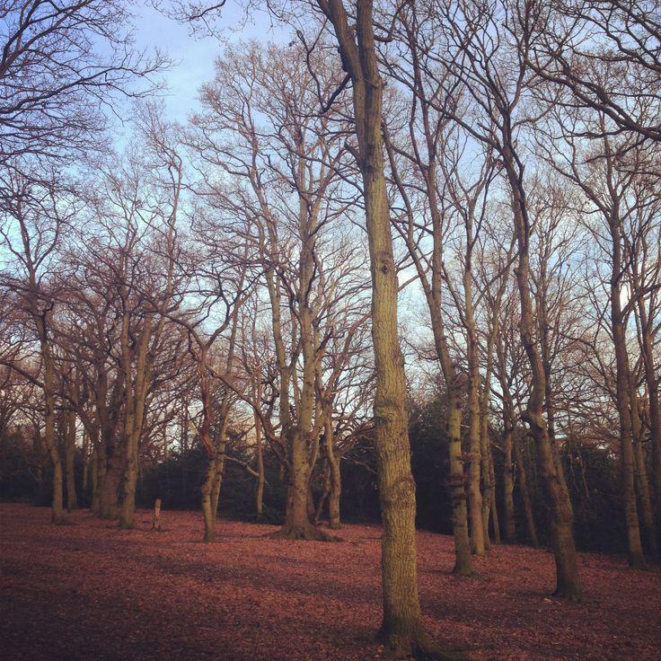 Winter in Streatham Common woods