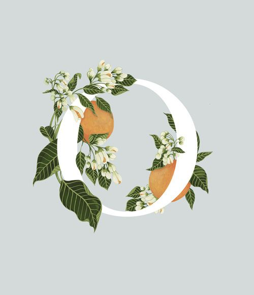 An A-Z of Edible Flowers on Behance   Charlotte Day