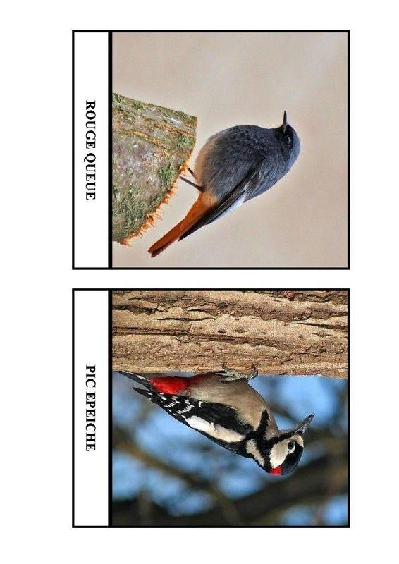 Imagier des oiseaux de chez nous - Page 7