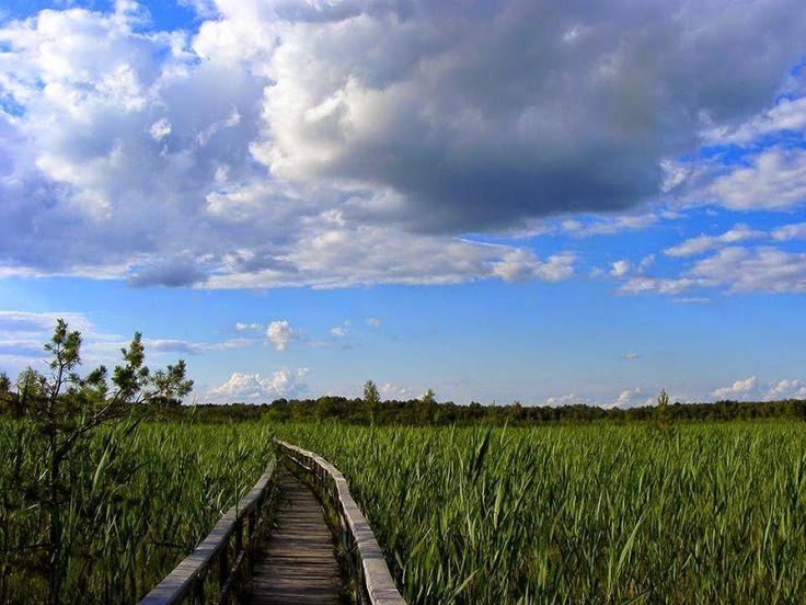 Perełka - Ścieżki i szlaki w Poleskim Parku Narodowym