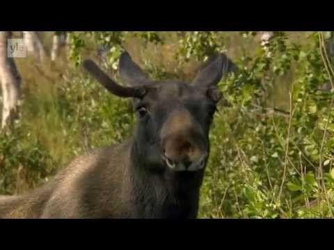 Avara luonto - Villi Pohjola (3/6) Ruotsi - YouTube