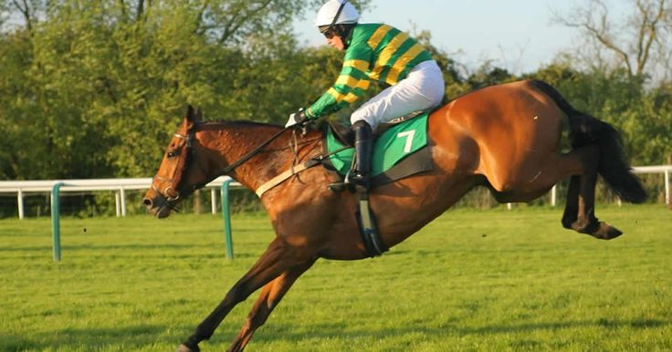 A horse by horse guide to all the runners in the 2015 Grand National, plus the latest betting odds and tips for the big race.