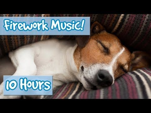 Relaxing Music for Dogs to calm from Fireworks, loud noises - includes desensitising sound effects - YouTube