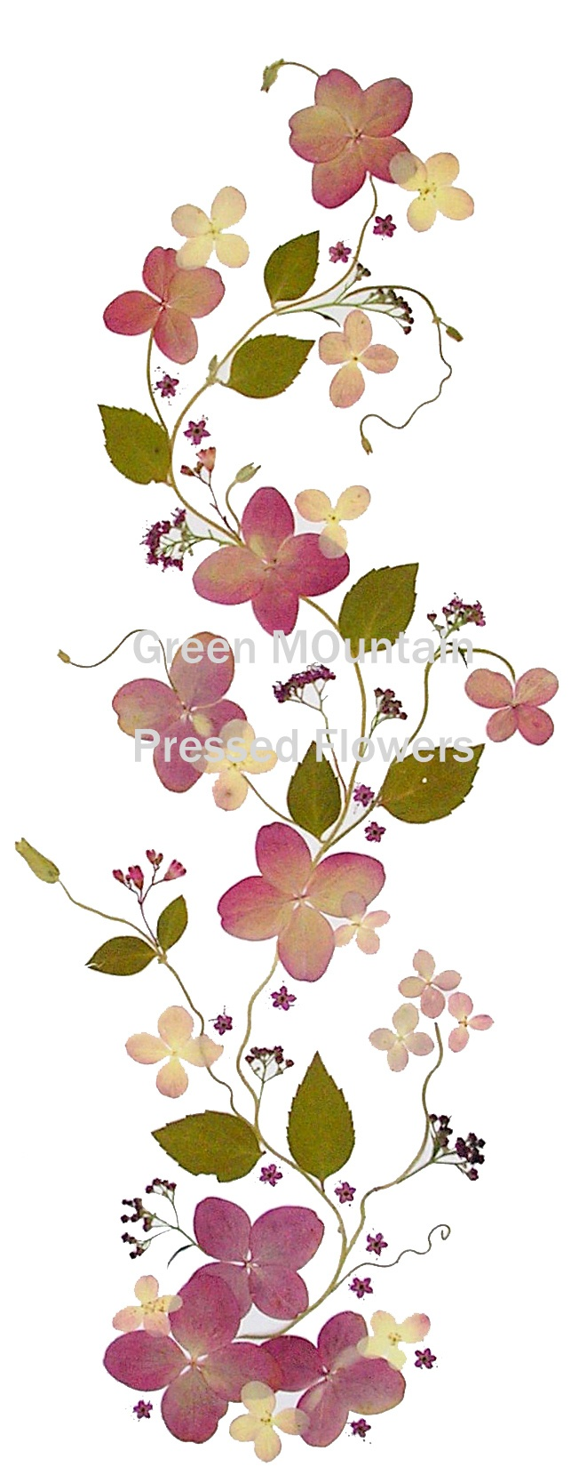best pressed flowers u leaves images on pinterest dry flowers