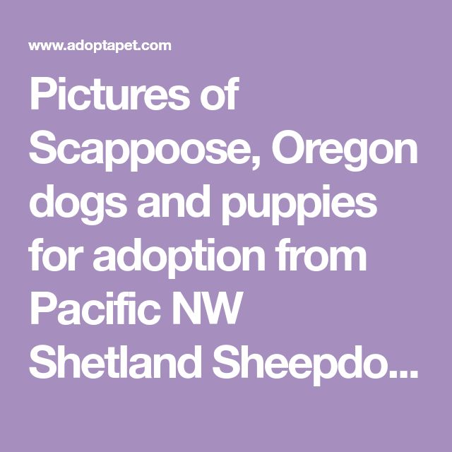 Pictures Of Scappoose Oregon Dogs And Puppies For Adoption From Pacific Nw Shetland Sheepdog Rescue Shetland Sheepdog Shetland Puppy Adoption