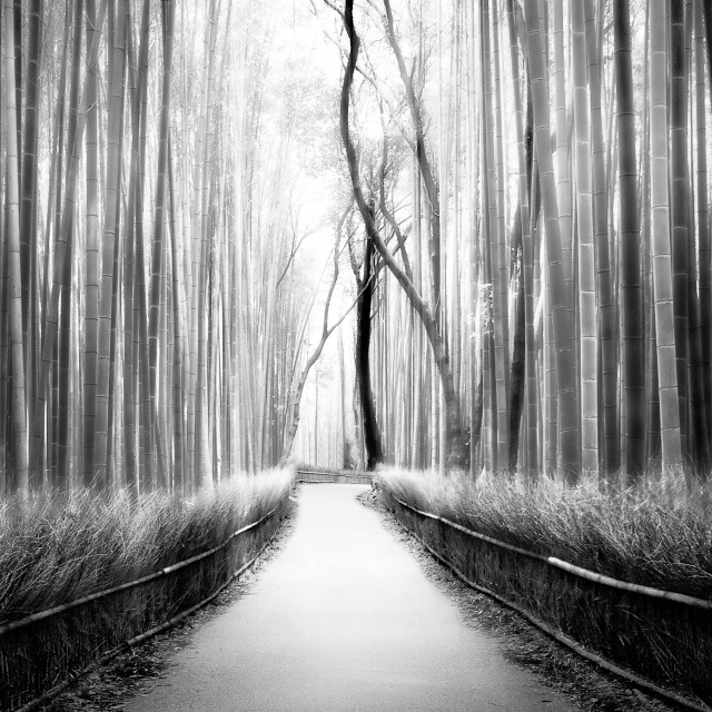 Reminds me of the bamboo forest we walked through in hawaii just a beautiful surreal experience honshū black and white travel photography by peter