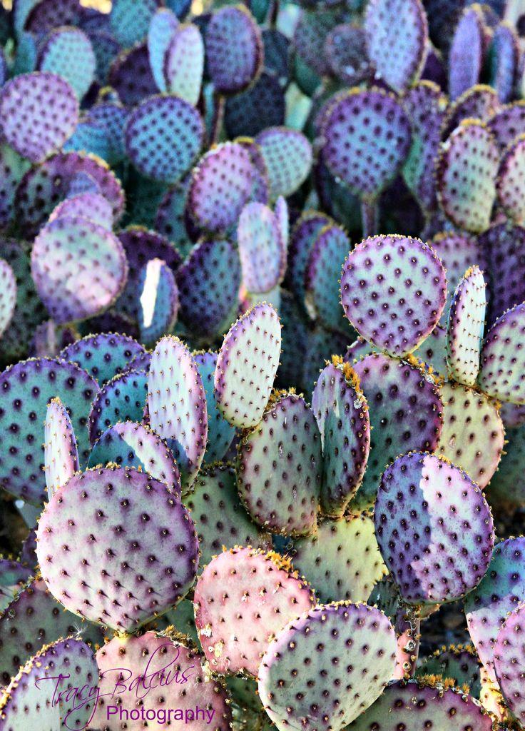 629 Best Cool Cacti Images On Pinterest Cacti Plants