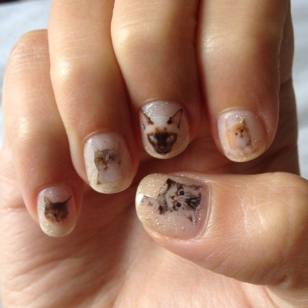 Cat nails on our friend Harley Viera-Newton.: Cat Nails Art, Kitty Nails, Kitty Cat, Nailart, Cat Meow, Catnail, Nails Decals, Crazy Cat Lady, Cat Photos