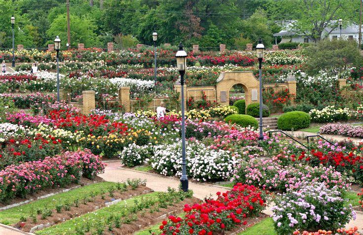 Tyler Texas Rose Garden Einer Der Grossten Rosengarten In Amerika Rose Garden Tyler Texas Texas Gardening