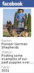 Our Long Coat German Shepherds from Long Coat German Shepherd breeders - Long Coat German Shepherd puppies for sale