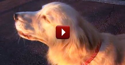 This Hilarious Little Dog NAILED Her Impression of a Siren - LOL
