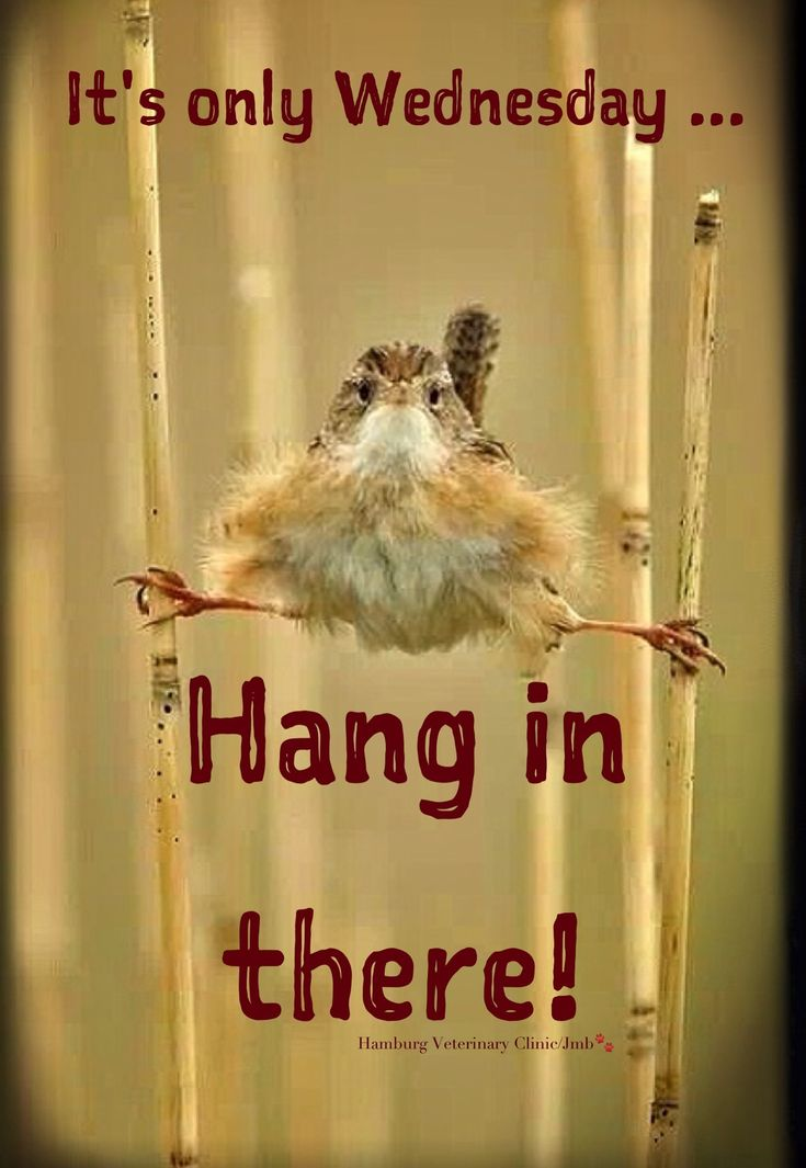 Wednesday Humor - Animal funny: Happy Wednesday!   Hang in there. The weekend is coming!