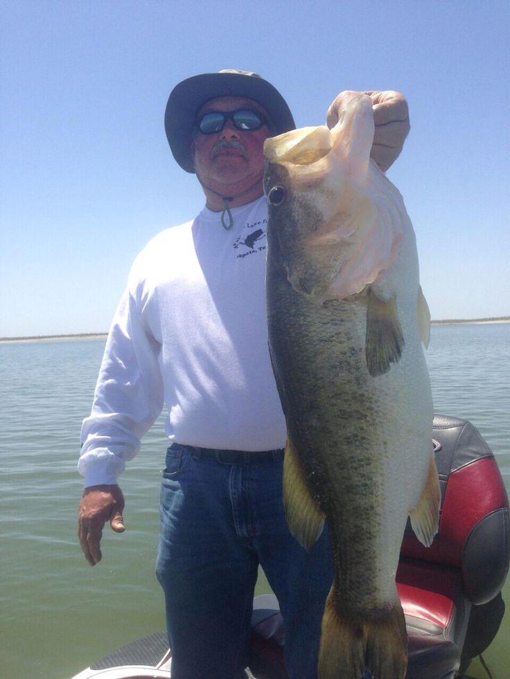 Large mouth bass california delta 2012 fishing for California bass fishing