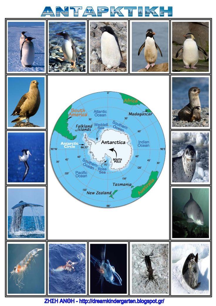 Το νέο νηπιαγωγείο που ονειρεύομαι : Πίνακες αναφοράς : Τα ζώα της Ανταρκτικής