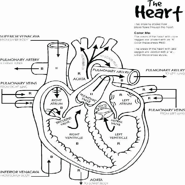 Blank Diagram Of The Heart Human Heart Worksheets In 2020 Heart Diagram Nurse Nursing Study